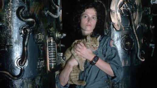 alien y gato