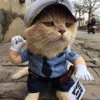 Gatos reales famosos