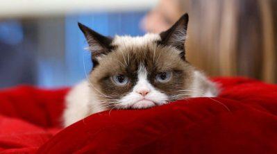 Grumpy Cat2